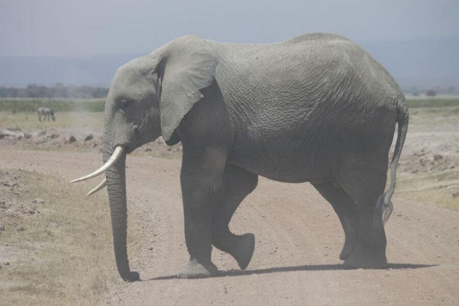 Kilimanjaro Safari - 3 Days