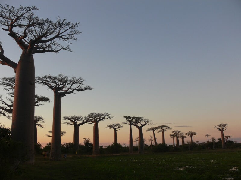 10 DAYS TSINGY AND BAOBABS