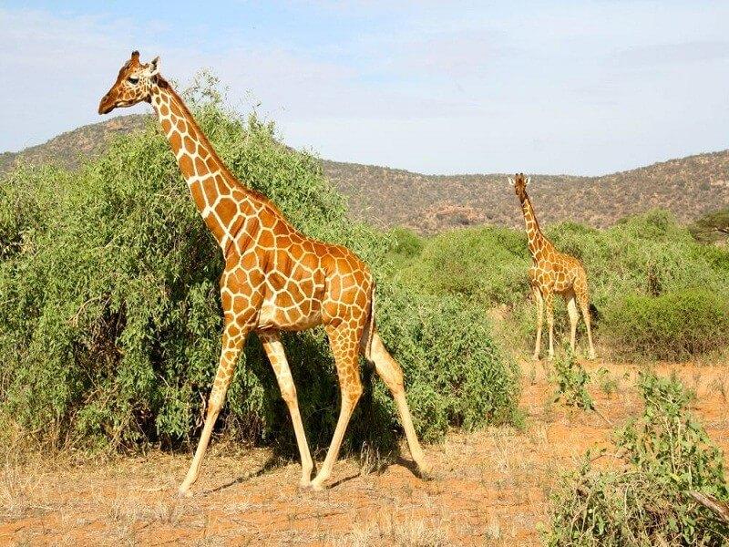 4 Days Serengeti Migration Safari