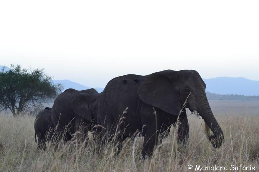 Uganda from North to South Safari