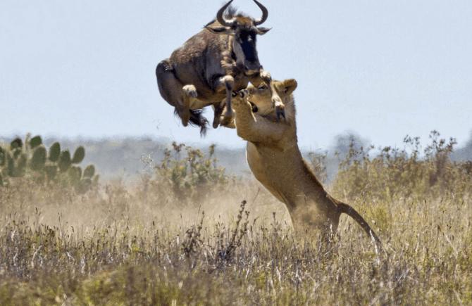Nasirobi to Maasai Mara