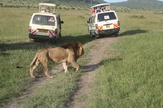 Kenya Maasai Mara Safari