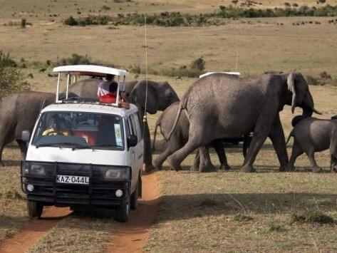 Kenya Honeymooners Safari