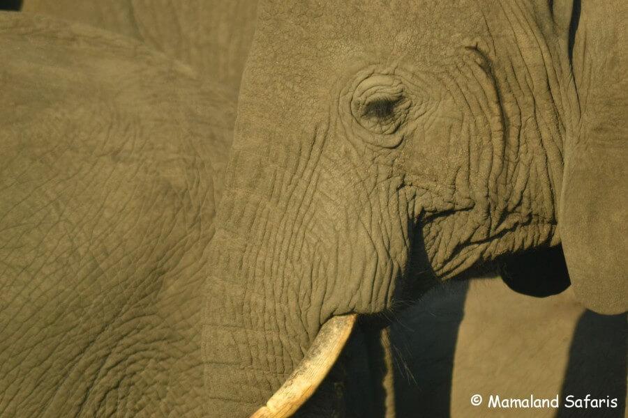 Uganda and Rwanda Highlights Safari