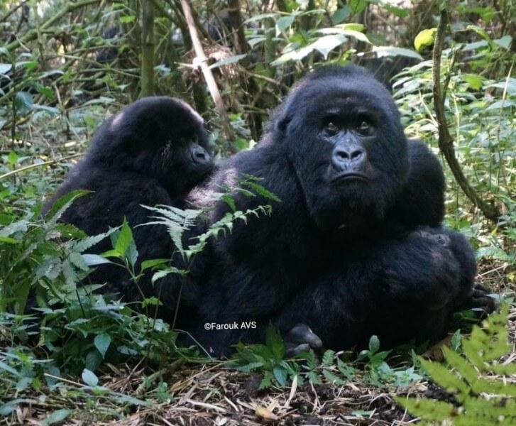 19 Days of Cycling & wildlife Safari in Uganda