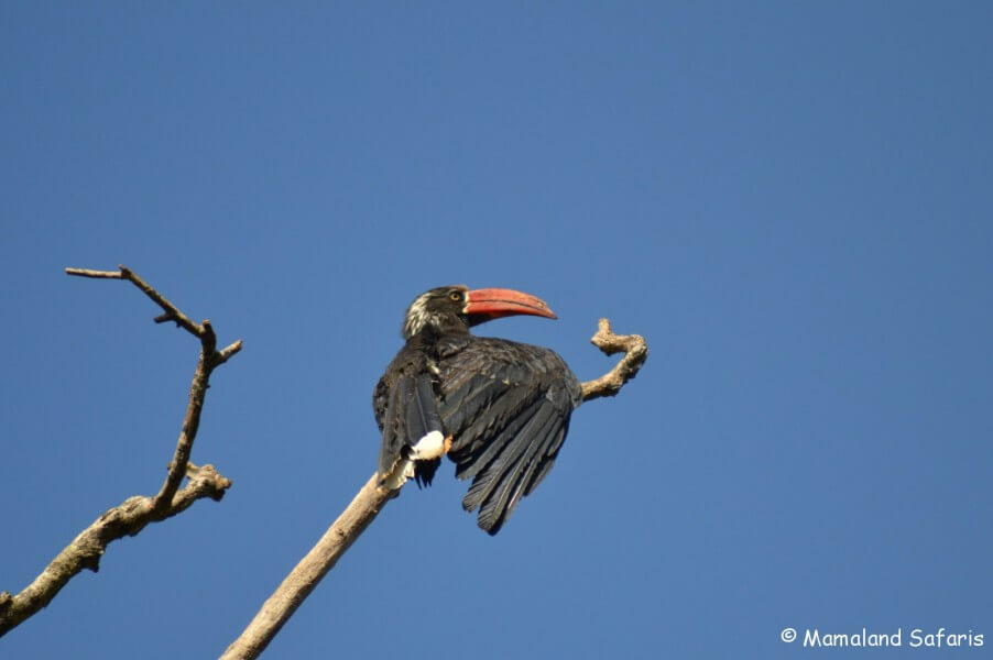 Birding & gorillas - Safari in Uganda
