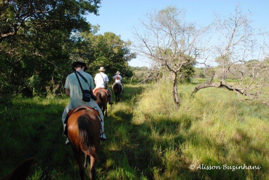 7 Days Pantanal and Bonito