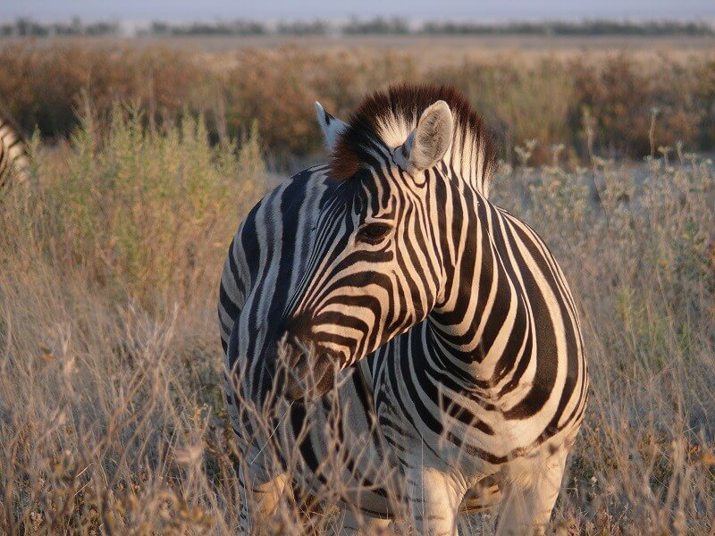 4-Day Taste of Etosha Safari