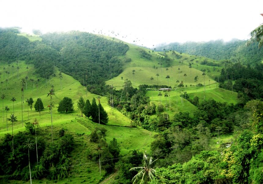 Cocora Valley and Salento