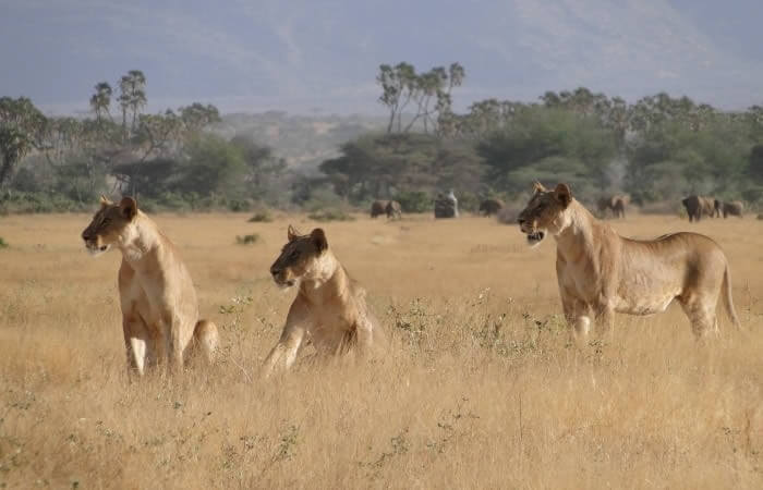 3 days Masai mara  tented camping safaris