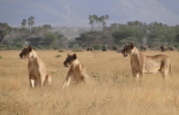 3 days Masai mara  group tour safaris