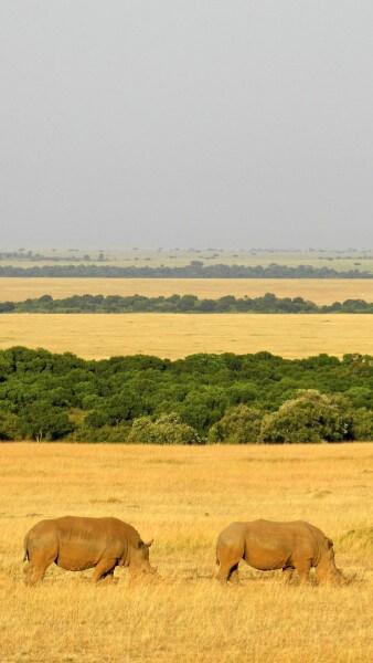 Masai mara Nairobi