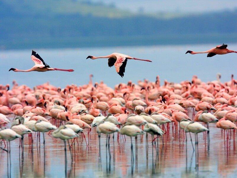 10 days tour to Kenya and Tanzania Parks