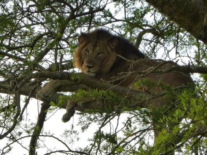 7 Days-Gorillas, Chimps and Wildlife