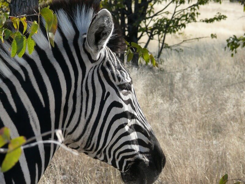 11-Day Etosha, Caprivi, Chobe and Vic Falls green season safari