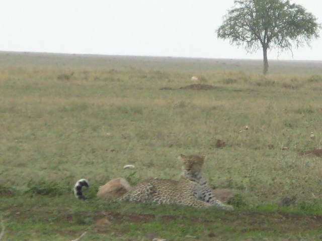 Serengeti, game drive