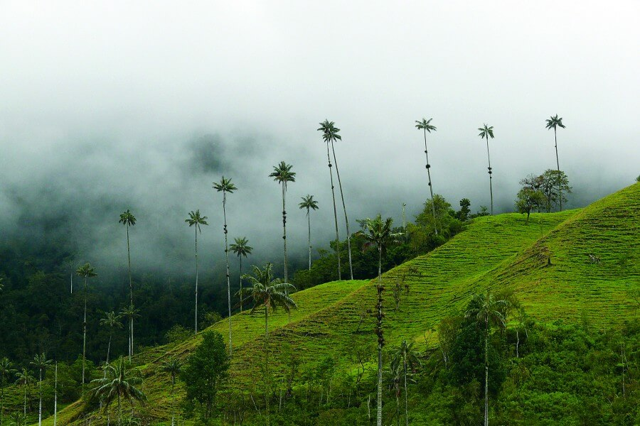 Cocora Valley & Salento