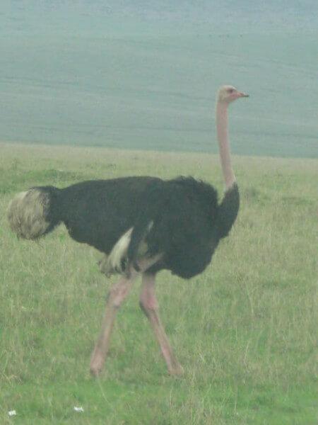 Tanzania Fantastic Photo Safari