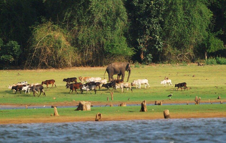 Visit Nagarhole Park