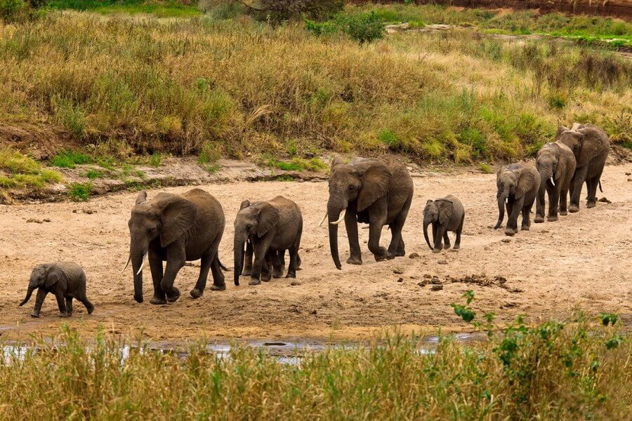 6 Days Lake Manyara- Serengeti & Ngorongoro Safari