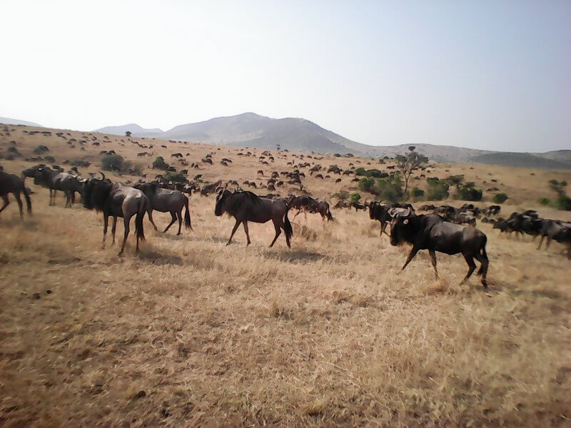 9 Days Wildlife Migration Safari (Plains & Migration)