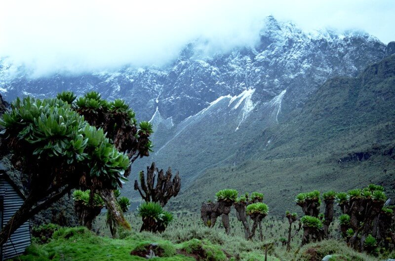 John Matte-Bujuku Hut (3977m