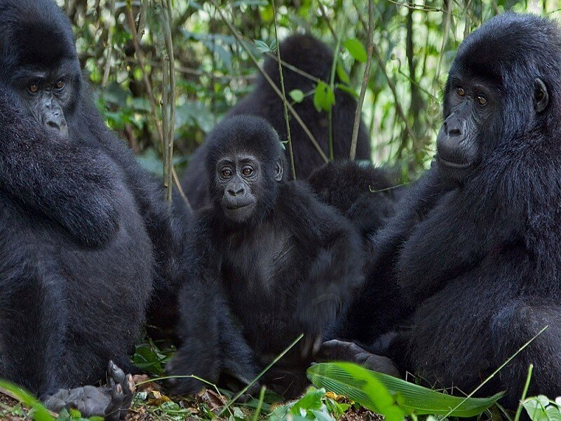 9 DAY GORILLA, WILDLIFE AND THE NILE ADVENTURE