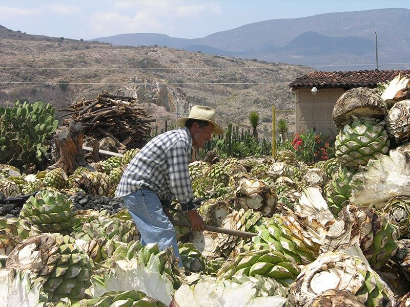 Tequila and its Agavero Land