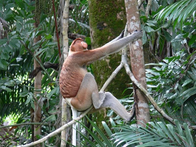 7 Days Borneo Tour