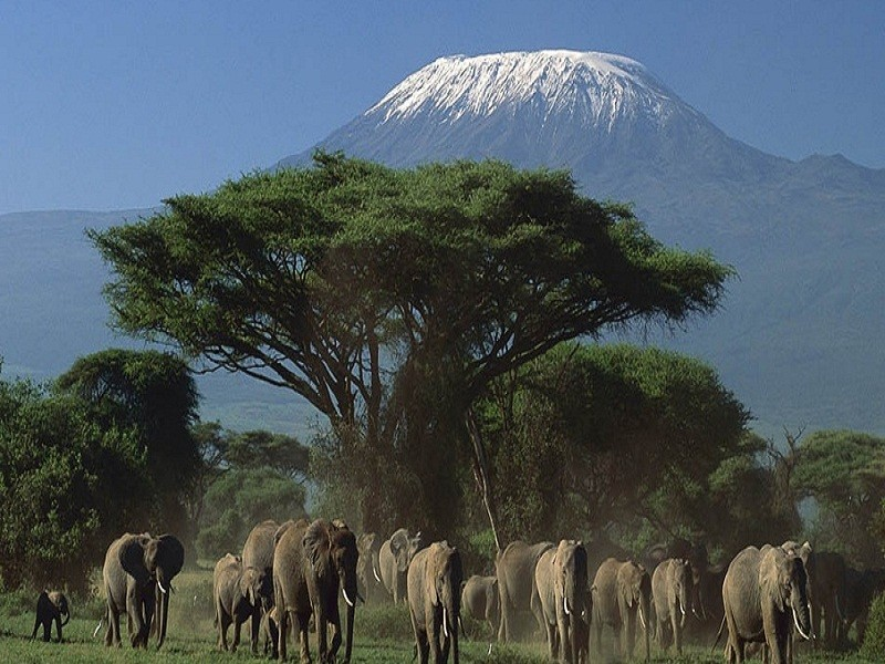 5 Days Amboseli Naivasha  Nakuru