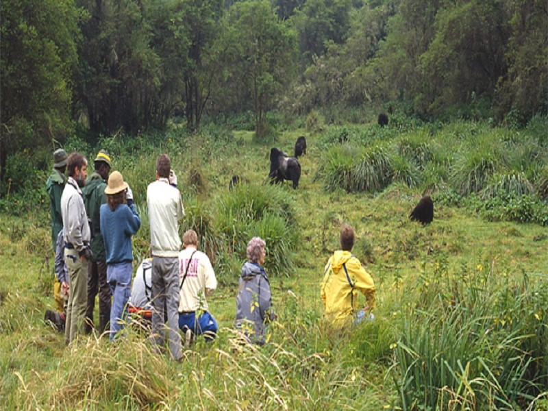 3  Days Gorilla Trek