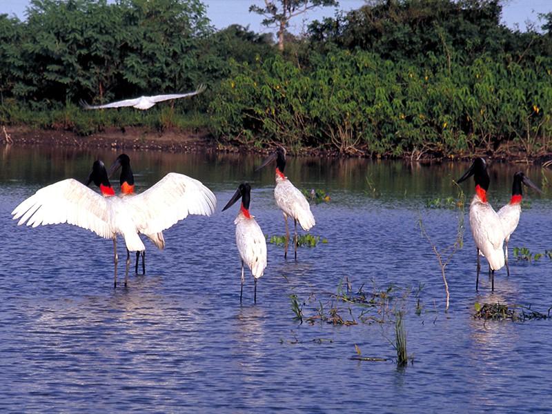 Wild Brazil: Rio de Janeiro / Pantanal / Bonito