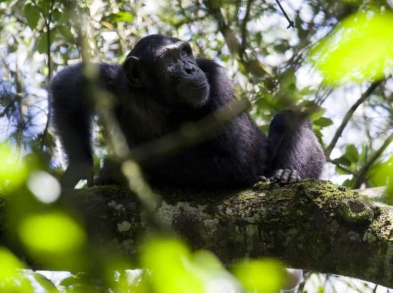 12 Days Rwanda – Uganda Primates and Wildlife Safari