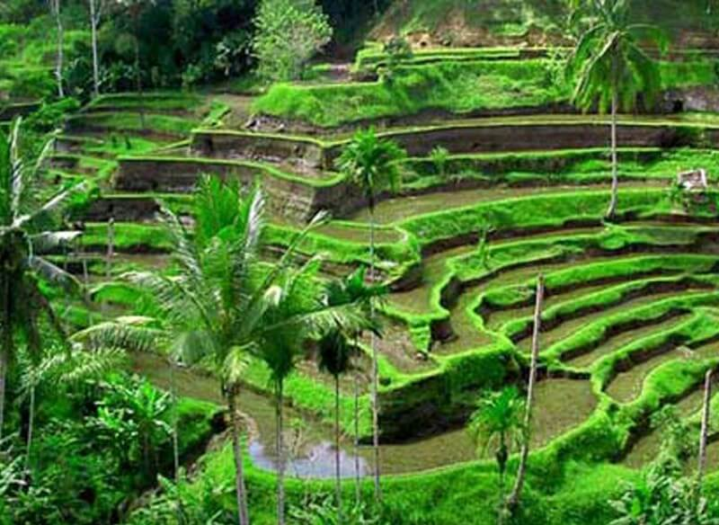 8 Days Culture, Relax and Tradition Of Bali Tour