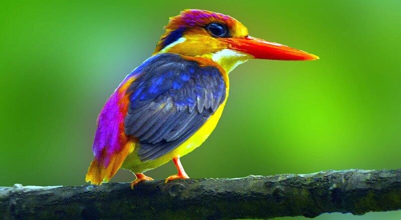 Amazing Nature Lovers