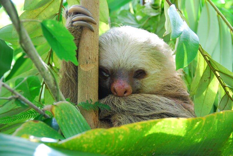 Amazing Costa Rica