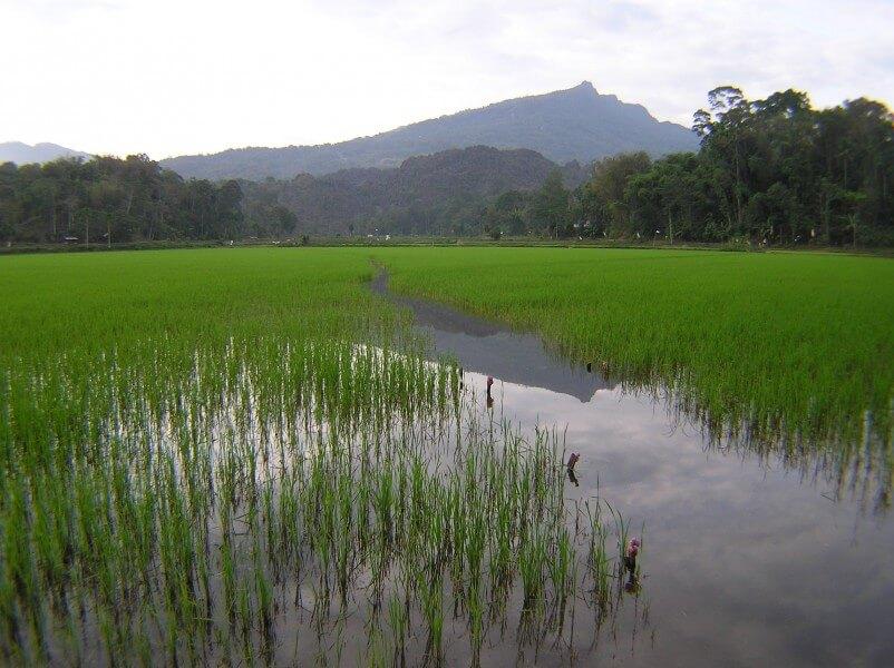 Toraja Highland