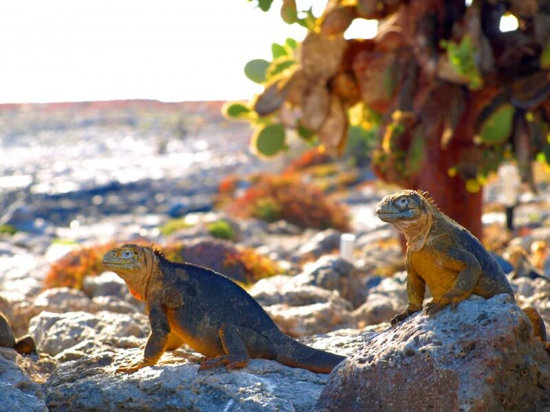 Journey to the Pinnacle Rock of Galapagos