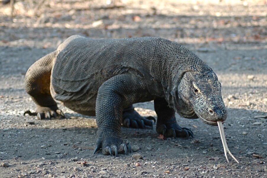 Komodo - Labuanbajo