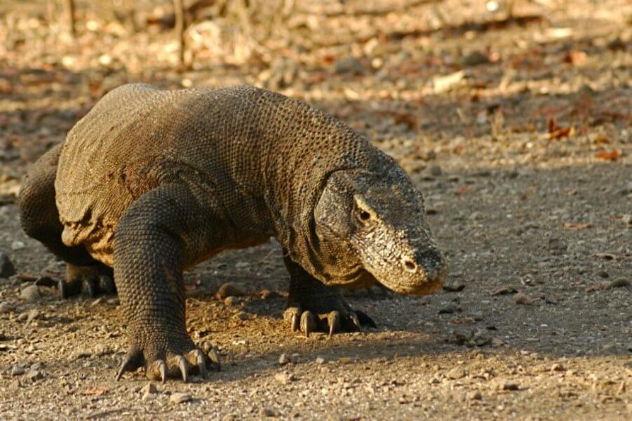 Labuanbajo - Komodo