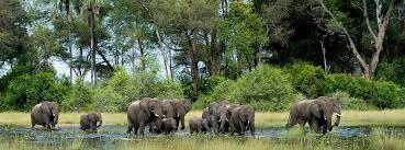 Okavango,Moremi,Khwai,Maun Tour