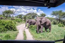 Chobe,Savuti,Moremi,Okavango Delta Tour