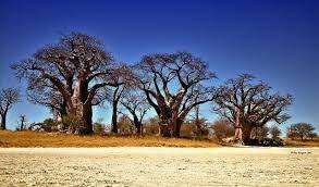 Scenic Flight,Nxai Pan, Cultural Village, Khwai, Savuti, Chobe, Kasane Tour