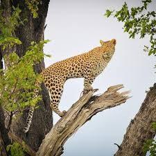 Central Kalahari Game Reserve, Makgadikgadi, Nxai, Okavango, Moremi, Khwai, Savu