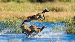 Scenic Flight, Okavango Delta, Moremi Tour