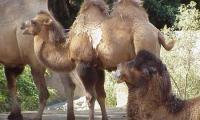 5 days Tour of Harrar,Dire Dawa and Awash National Park