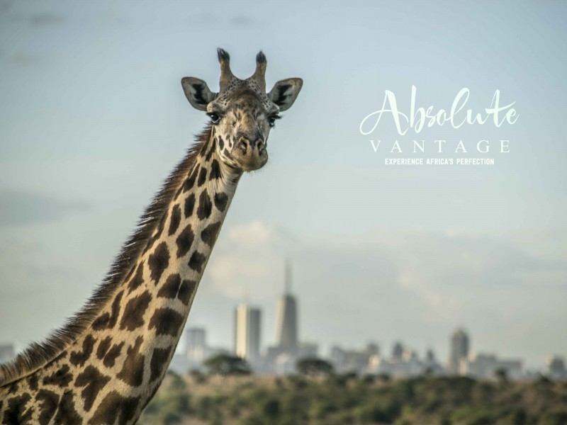 Absolute Best of Kenya's Wildlife - 10 Days
