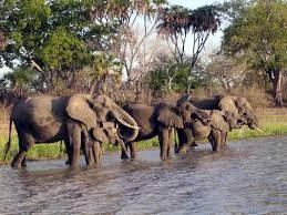 Zanzibar and selous safari