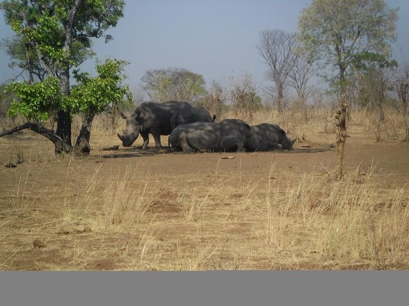 7 Days Safari Package in Livingstone and Lower Zambezi National park