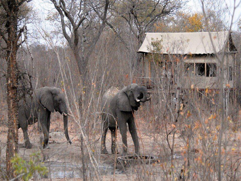 6 Days 5 Nights Safari Package in Livingstone and Hwange National Park in Zimbab